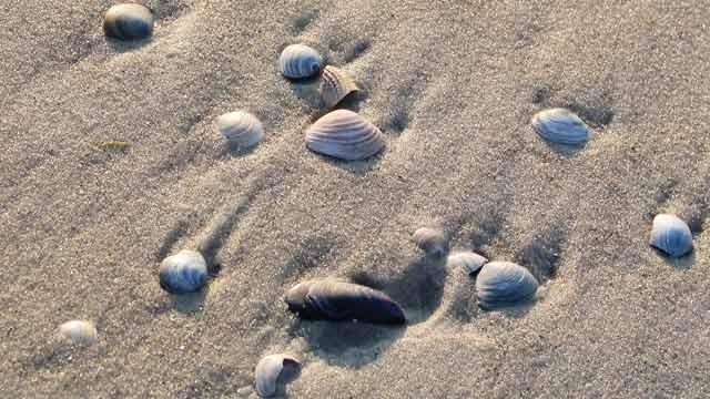 Ferienwohnung Muscheln Und Strand F 252 R 1 4 Personen